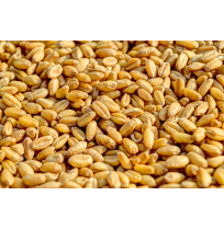 Loose Wheat - 1kg